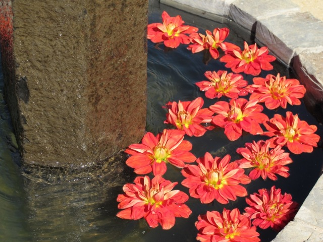 Kate's Blossoms, Quarryhill, Fountain Flowers