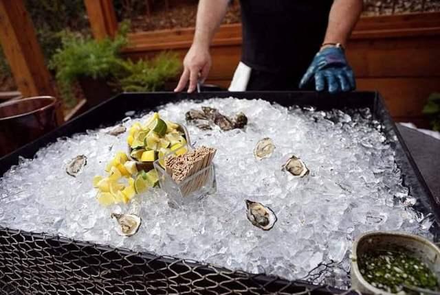 Blog-Hog Island Oysters